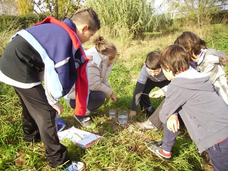 Activitats educació ambiental